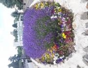 kwiatki_Blarna3
