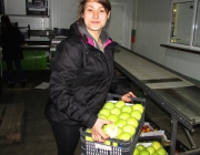 Frutas do Cavado
